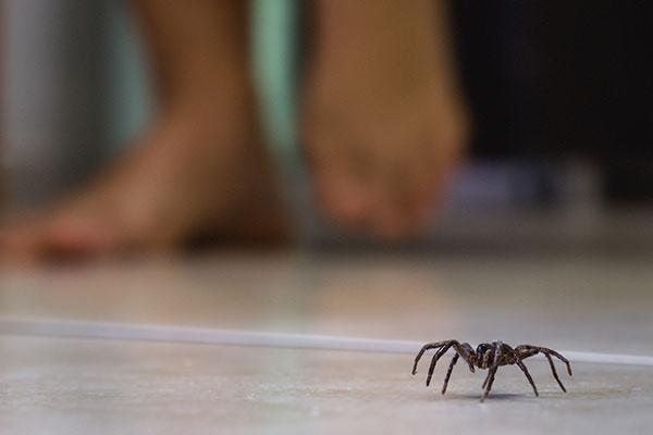 Spider Exterminators at Leo's Pest Control in Bristol TN